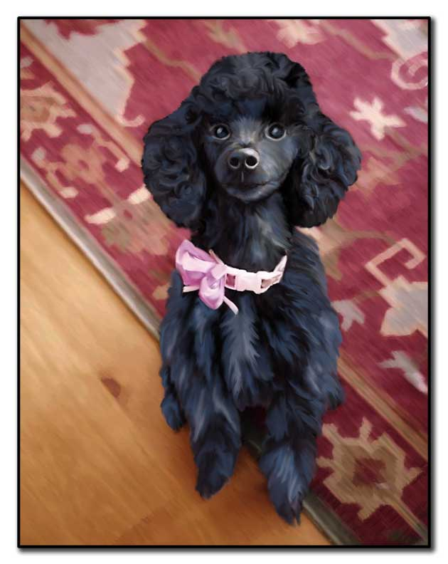 Paintings from photos - Here is Cloie a Poodle